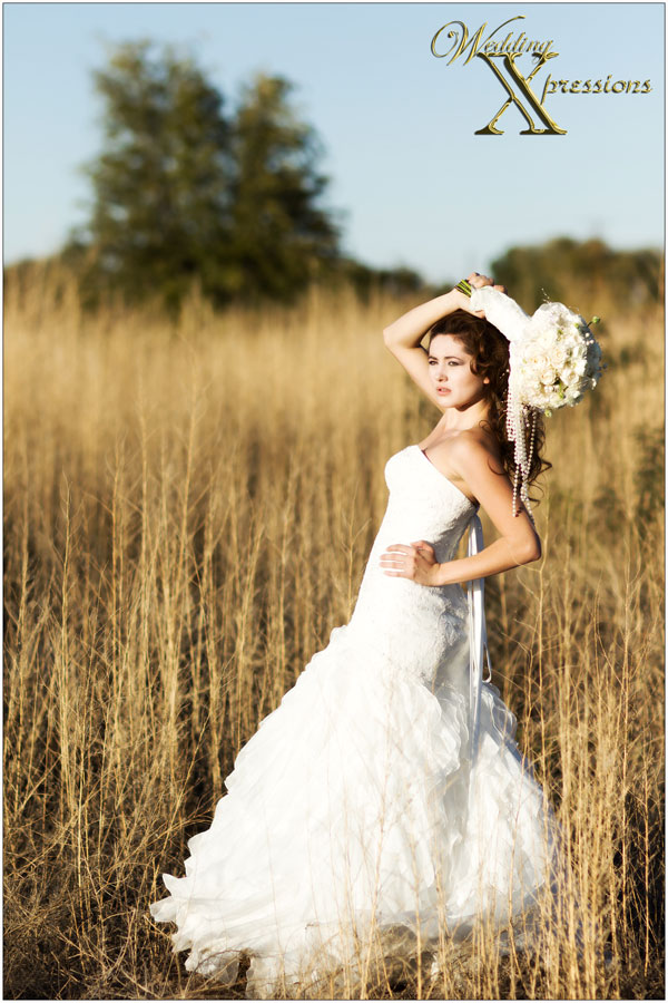 Wedding Dresses In Texas. Amazing Amore Wedding Dresses Page Of ...